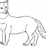 vlk_1