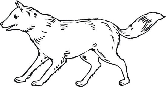 vlk_18