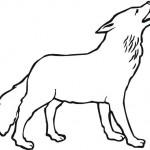 vlk_9