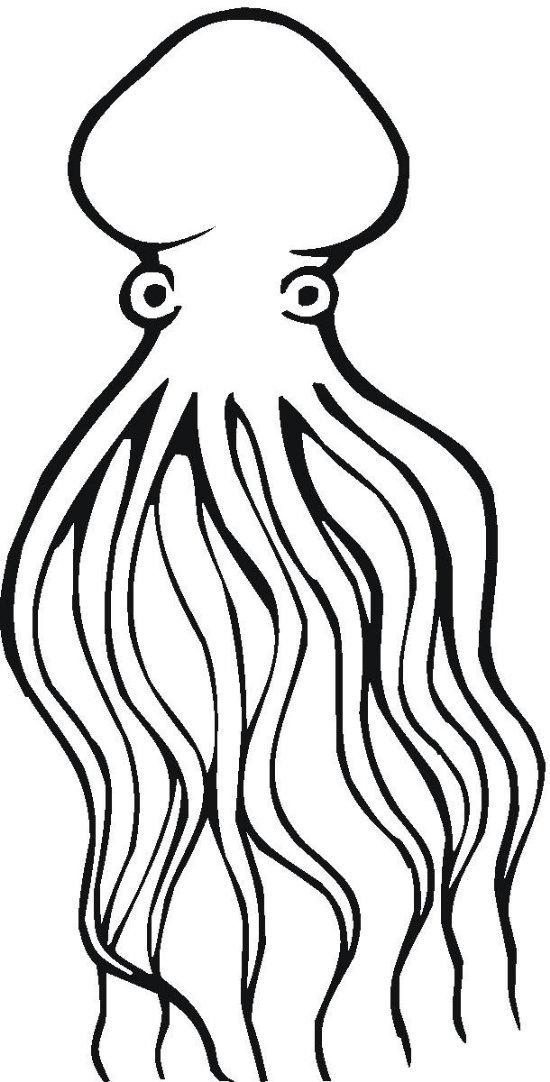 chobotnice_03