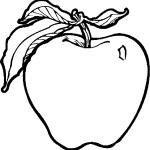 ovoce_05