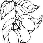 ovoce_118