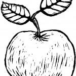 ovoce_12