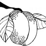 ovoce_133