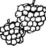 ovoce_153