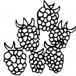 ovoce_156