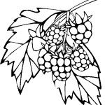 ovoce_157