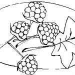ovoce_158