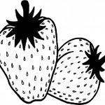 ovoce_162