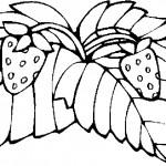 ovoce_163