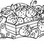 ovoce_166