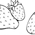ovoce_168
