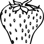 ovoce_170