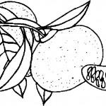 ovoce_172