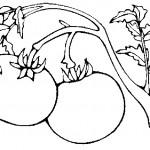 ovoce_184