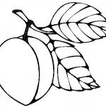 ovoce_20