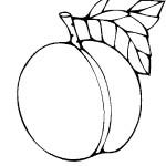 ovoce_21
