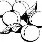 ovoce_22