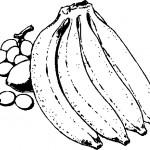ovoce_37