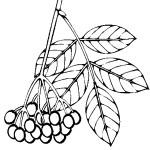 ovoce_43