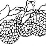 ovoce_44