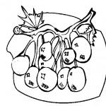 ovoce_45