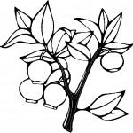 ovoce_48