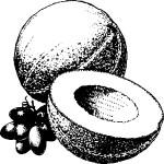 ovoce_50