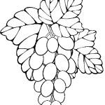 ovoce_82