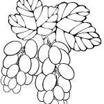 ovoce_84