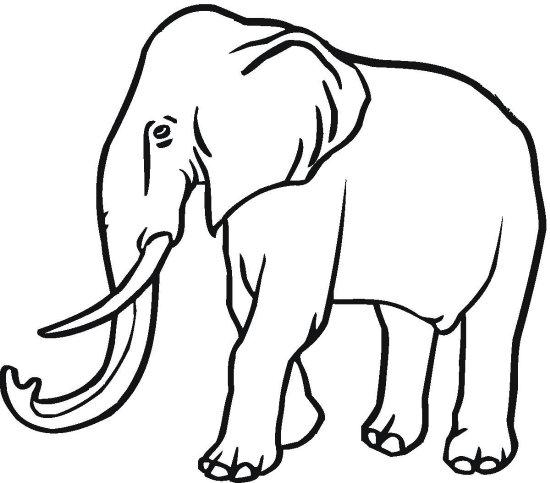 slon omalov nky