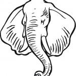slon_10